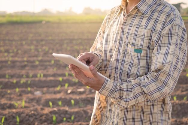 Landbouwer die digitale tablet op een graangebied gebruiken