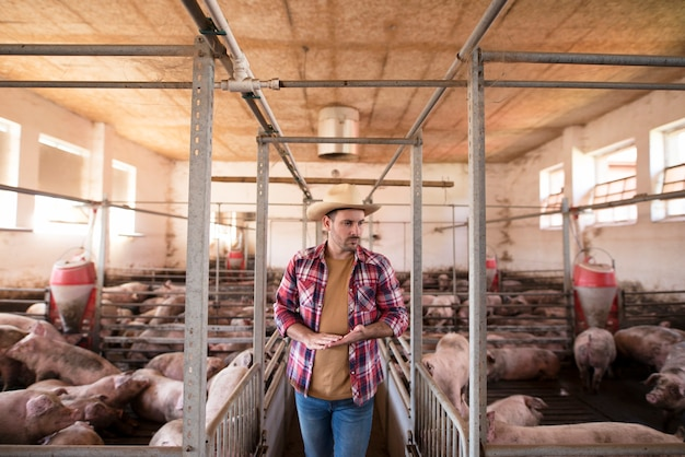Landbouwer die door varkenskooien loopt