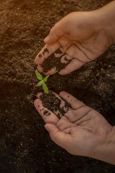 Landbouwer die een cannabishand zaailingen van de kunstmeststof geven