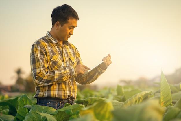 Landbouwer die installatie in tabakslandbouwbedrijf onderzoekt. landbouw en wetenschapper concept.