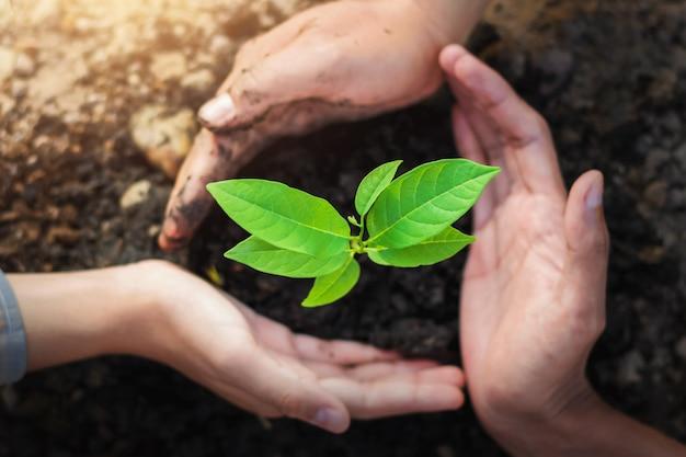 Landbouwer drie boom van de handbescherming het planten op grond met zonneschijn in tuin