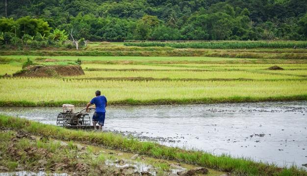 Landbouwer het werken ploeglandbouwgrond het lopen tractor op padieveld dat op de landbouw aziatische landbouw wordt voorbereid