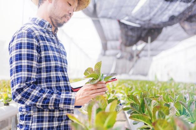 Landbouwer hydroponics plantaardig landbouwbedrijf in de serre