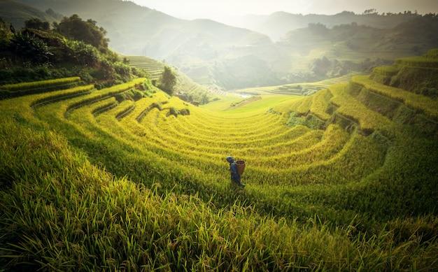 Landbouwer in padievelden op terrasvormig in rainny seizoen bij mu cang-chai, vietnam.