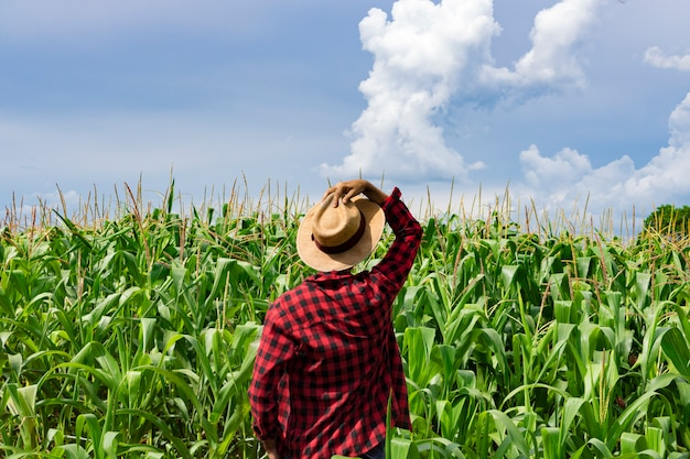 Landbouwer met hoed die het gebied van de maïsaanplanting kijkt
