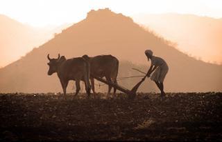 Landbouwer op het werk
