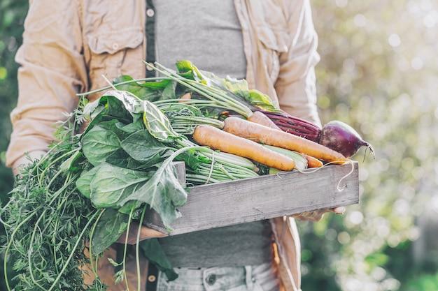 Landbouwer volwassen mens die verse smakelijke groenten in houten doos in tuin houdt vroege ochtend