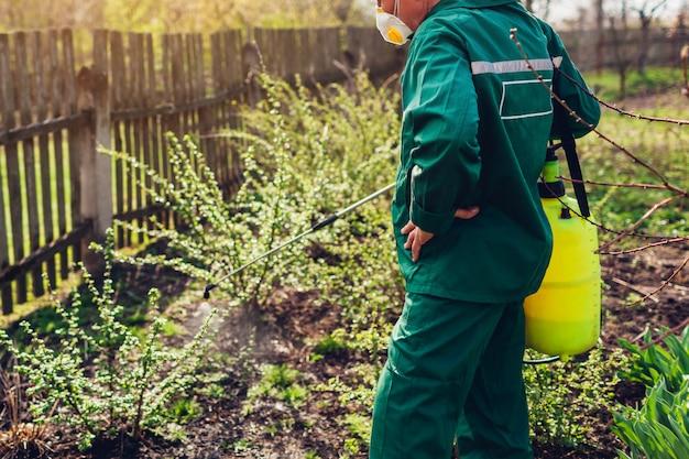 Landbouwers bespuitende struik met handmatige pesticidesproeier tegen insecten in de lentetuin