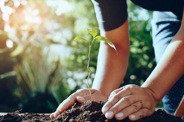 Landbouwershand die boom planten in gardren voor sparen wereld