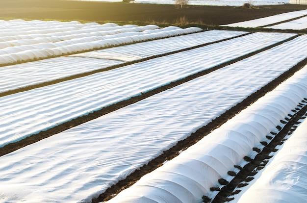 Landbouwersplantagevelden bedekt met spingebonden agrofibre. verhoogd overlevingsgewas voor planten