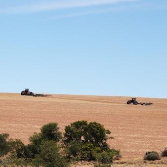 Landbouwgebied bedekt met het gras onder een blauwe hemel