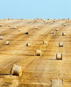 Landbouwgebied en de hemel in de zomer. op het grondgebied van het veld wordt tarwe geoogst, dat is gerijpt en vergeeld. Premium Foto