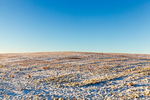 Landbouwgebied met droog gras voor weilanddieren bedekt met sneeuw, winterlandschap
