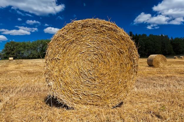 Landbouwgebied met hooibergen na het oogsten van rogge
