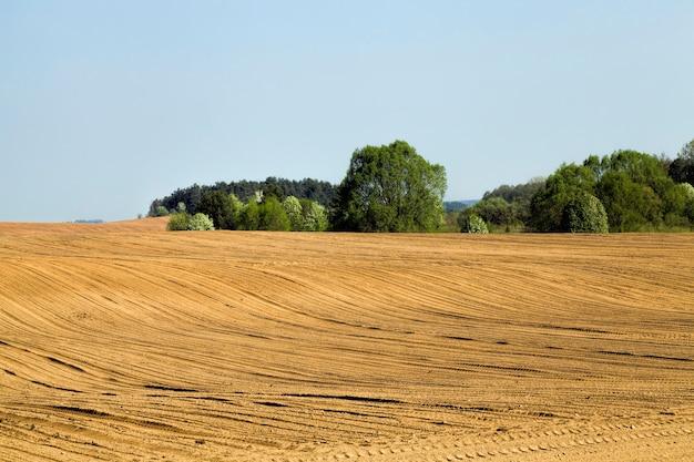 Landbouwgebied met landbouwgewassen die voedselzekerheid bieden, nuttige groenten biologische landbouw