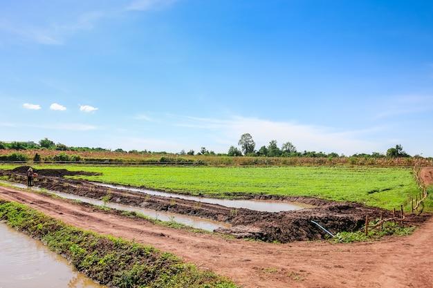 Landbouwgebied op landelijk landschap - vijver, weiden met blauwe hemel en wolken