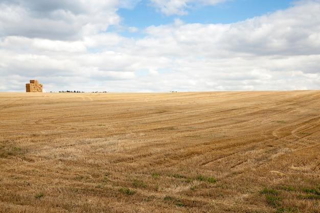 Landbouwgebied waar gewassen granen, tarwe geoogst
