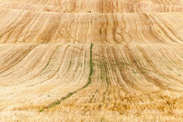 Landbouwgebied waar gewassen rijpe gele rogge geoogst