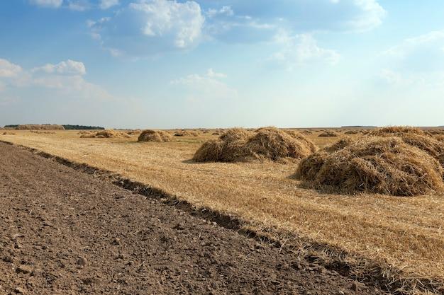 Landbouwgebied waar het oogsten van granen wordt uitgevoerd