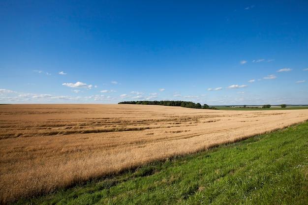 Landbouwgebied waarop granen tarwe groeien