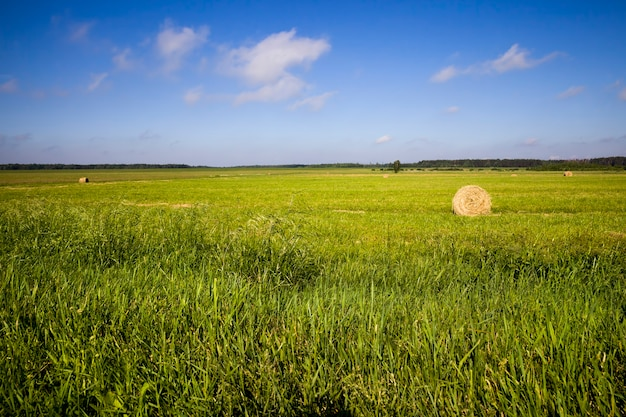Landbouwgewassen in het veld