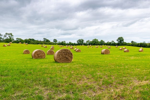 Landbouwgrond met vers gerolde hooibalen met lage bewolkte hemel.