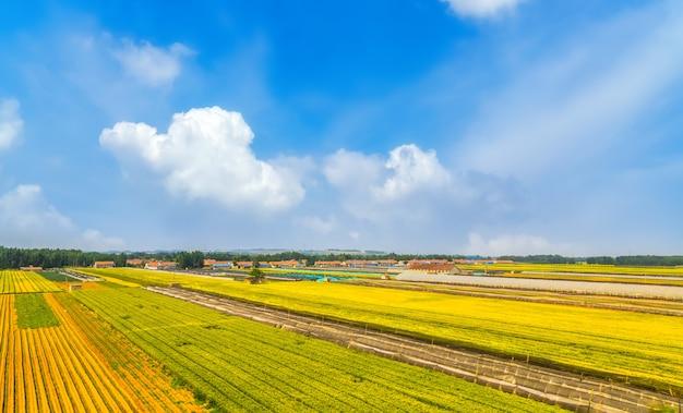 Landbouwgrond onder blauwe lucht en witte wolken