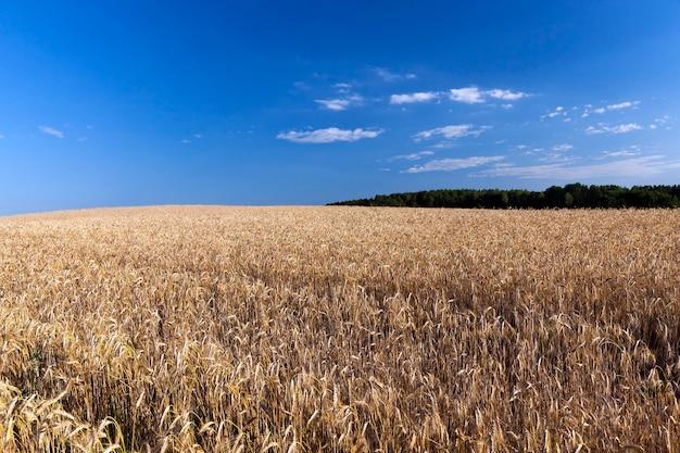 Landbouwgrond waarop de oogst van de producten die nodig zijn voor de voeding van mensen of dieren groeit