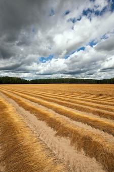 Landbouwgrond waarop onlangs vlas is verwijderd. herfst