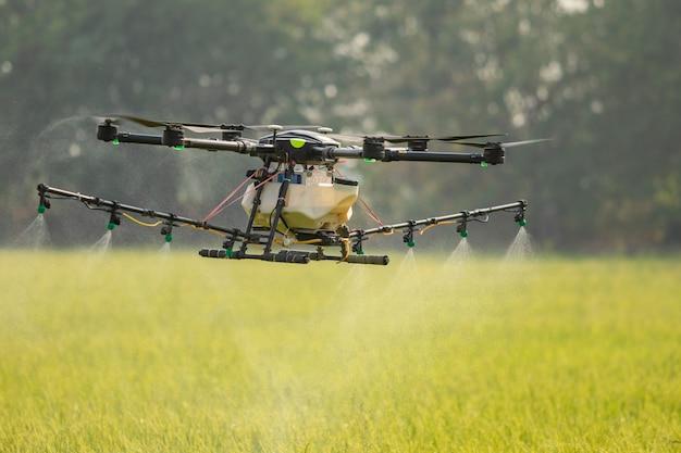 Landbouwhommel die over het padieveld vliegen om chemisch product of kunstmest te bespuiten.