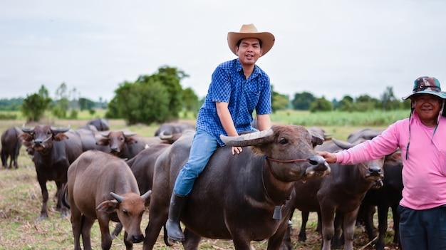 Landbouwindustrie, landbouw, veeteeltconcept - de jonge mens zorgt voor thaise buffels
