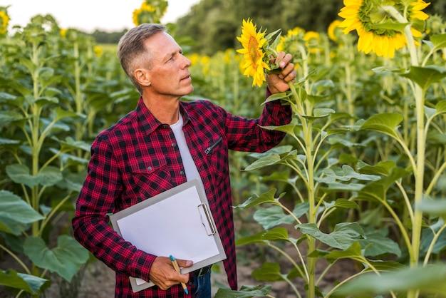 Landbouwingenieur die een zonnebloem inspecteert