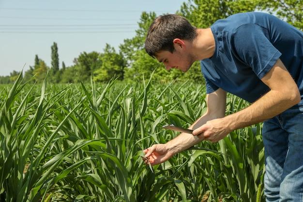 Landbouwingenieur met klembord in maïsveld