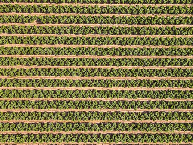Landbouwlandschap gecultiveerd veld met fruitbomen in rijen Premium Foto