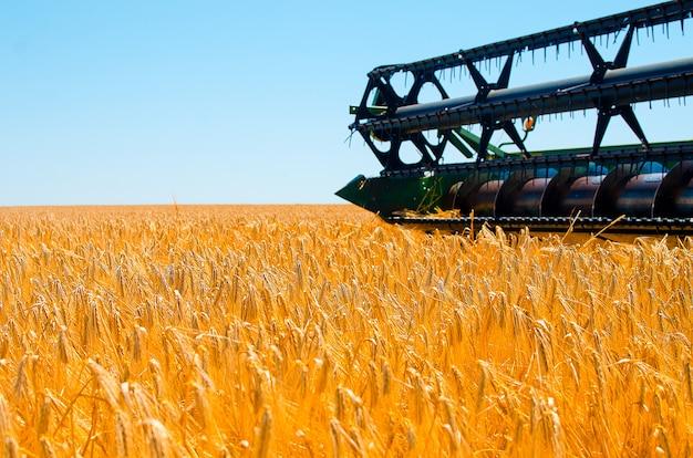 Landbouwmachines verzamelt geel tarwegewas op open gebied op een zonnige heldere dag