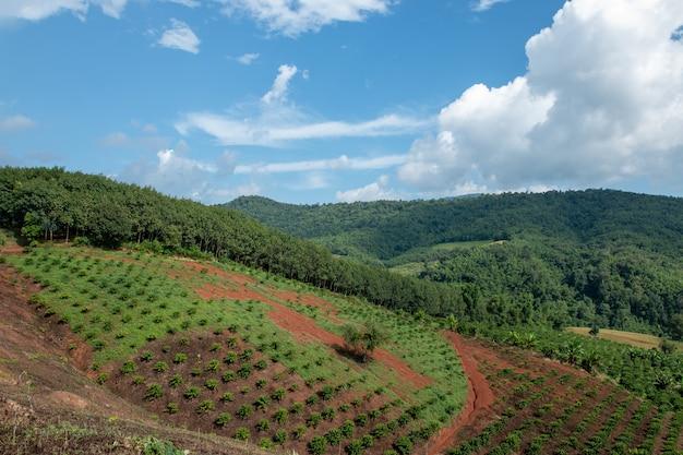 Landbouwplantages in de bergen op een heldere blauwe hemeldag