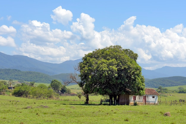 Landelijk landschap: mangoboom voor een eenvoudig huis, typisch voor landelijk brazilië, met heuvels en cumuluswolken op de achtergrond