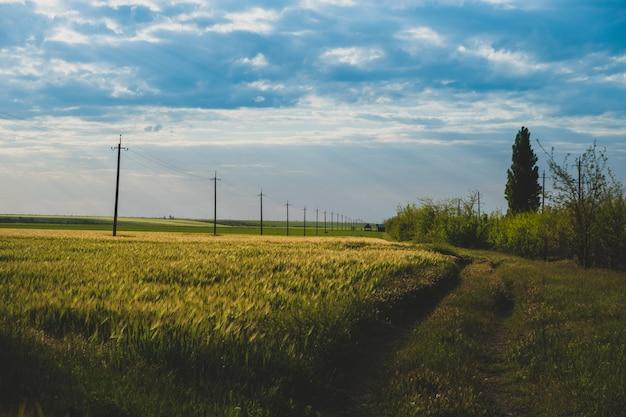 Landelijk landschap met een weg landbouwgrond natuur agrarisch landschap
