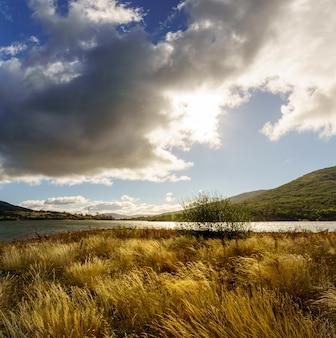 Landelijk landschap met hoge wilde grassen met gouden tinten in de lente, blauwe lucht met donkere wolken en ontspannende en mooie sfeer. spanje, lozoya, madrid.