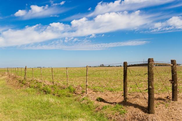 Landelijk landschap met lambrado van het argentijnse platteland