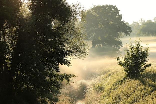 Landelijk landschap op een mistige zomerochtend