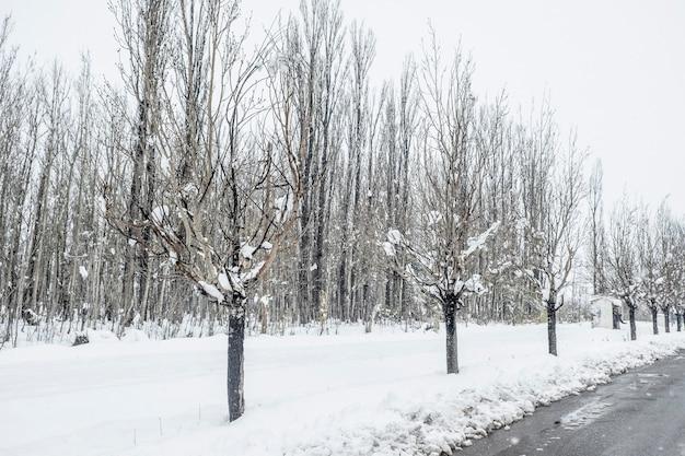 Landelijk landschap van bladerloze bomen en overdekte asfaltweg na een winterstorm