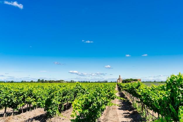 Landelijk landschap van wijngaardvelden in roussillon in zuid-frankrijk