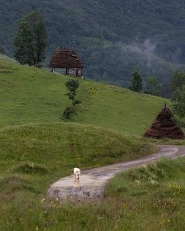 Landelijk plattelandslandschap in dumesti, het gebied van transsylvanië van roemenië