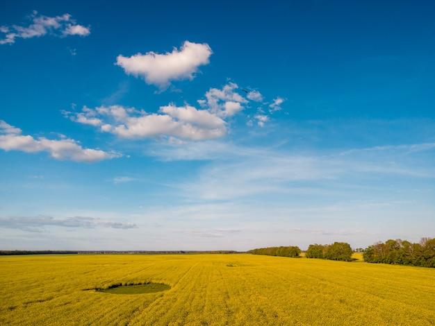 Landelijke foto van bloeiend koolzaad in het veld