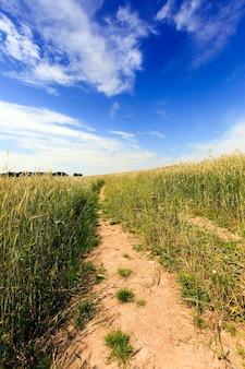 Landelijke onverharde weg die door een veld loopt