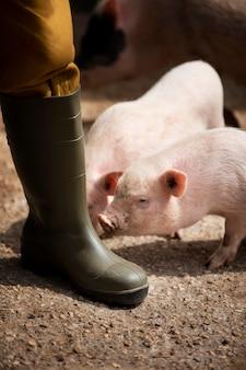 Landelijke reiziger en varkens close-up