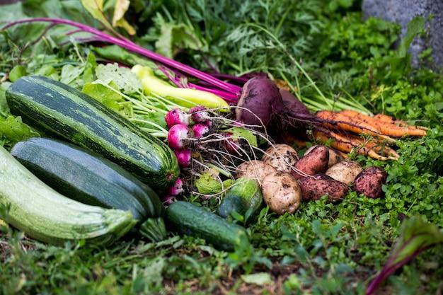 Landelijke stijl. landelijke economie. groenten oogsten.