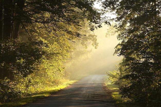 Landelijke weg door herfst bos bij zonsopgang