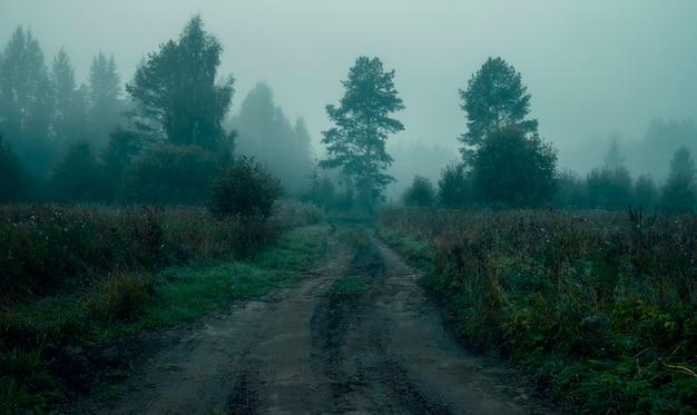 Landelijke weg in de mist voor zonsopgang in het bos. enge sfeer van halloween en slaperige holte